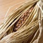【衝撃事実】みんなは納豆に何をかけて食べてる? 大規模アンケート結果発表