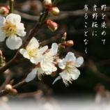 『フォト短歌「初名草」』の画像