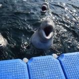 『【イルカ監獄】 イルカを救え!ウラジオストクの住民、シャチなどを保護するために行動を起こす -3/16決行!!』の画像