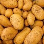 国際ポテトセンター「火星に似せた環境下でジャガイモ生育に成功したよ!」