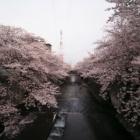 『投稿:LAOWA9mmF2.8ZERO‐D MFTによる桜 2021/04/08』の画像
