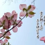 『薄紅色の花水木』の画像