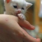 猫ちゃんだって綺麗になりたい2021