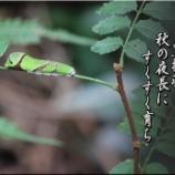 『黒揚羽』の画像