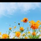 『★本日のYouTube動画のご案内★』の画像