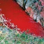 【韓国】アフリカ豚コレラ、殺処分された豚から出た血が流出し川が赤く染まる [海外]