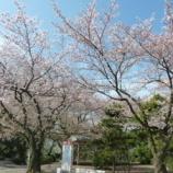 『花見日和』の画像