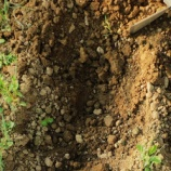 『第三の生物適応物質「土」(4350回記念)(8)土と光マイクロバブル(1)』の画像