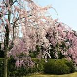 『城南宮の桜』の画像