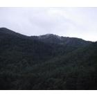 『森に消えたすみか』の画像