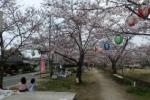 ただいま5分咲きくらい!今年も『星田妙見宮の桜並木』を視察してみた!