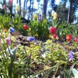 『春ですね』の画像