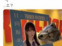 【日向坂46】かとし、オオカミに捕食されるwwww