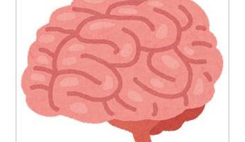 少女の卵巣から小さな脳と頭蓋骨の一部、髪の毛が発見される