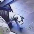 【イヌ】 男が椅子に座ってモニターを見ていた。一緒に監視するね♪ → 賢い犬はこうします…