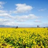 『早咲き菜の花畑(滋賀県守山市)が1月から絶景!春を先取りしたい人にオススメ。』の画像