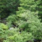 『夏の森の騒がしさ』の画像