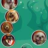 『2013-10-9のワンちゃん達』の画像