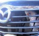 【画像】走行中の車のフロントグリルに挟まったオウムが可愛い