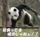 パンダ「ワシらのんびりしているようにみえるけどな、動くときは動くんや。なめたらあかんで」