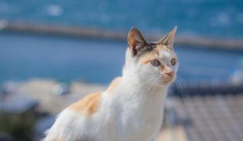 【良質画像】猫や風景の写真撮ったから見てくれ