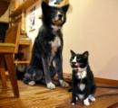 出会いは突然…そっくりな犬猫「兄弟」、夜は添い寝です