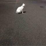 『猫に会えたんですよ😊』の画像