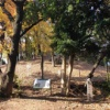 堺市にある古墳の魅力を伝え隊・第16回 西高野街道沿い・堺市指定天然記念樹木に指定される巨木の隣に佇む『御廟表塚古墳』