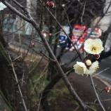 『春を告げる梅のほころび 戸田公園駅北東のまんようの花の道』の画像