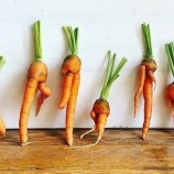 『規格外野菜』の画像