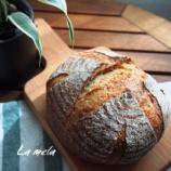 『中級 メロンパンと編みこみドック』の画像