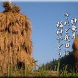 『稲神やどり』の画像
