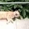 ネコが「ベランダ」で寝転んでいた。あくびをする。今日も平和だにゃ♪ → と思ったら…