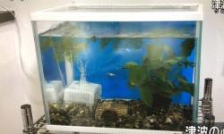 【画像あり】NHKの水槽が特定されてて草生える