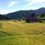 『今週から稲刈り始めます』の画像