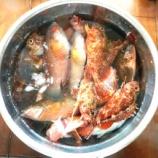 『国東の食環境(73)・ホゴとベラ』の画像