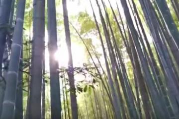 悲劇再びか?!富士の樹海を汚した海外YouTuberの友人が「日本の森」に行く