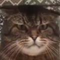 ネコの前で指を動かしてみた。人を指差すとは失礼な奴だ! → 猫はこうした…