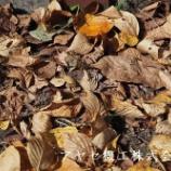 『アイドルキャリーweego  【運搬】【台車】』の画像