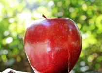 先生「りんごの皮30cm以上繋げて剥けてたら合格な!練習しとけよ」