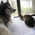【画像】イッヌとネッコ、本当は外で遊びたい