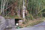 私市駅近くの竹藪の竹。結構大変なコトになってる〜湧き水のあるところ〜