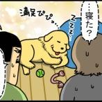 先住犬への挨拶を済ませないと新入り猫にはたどり着けない家