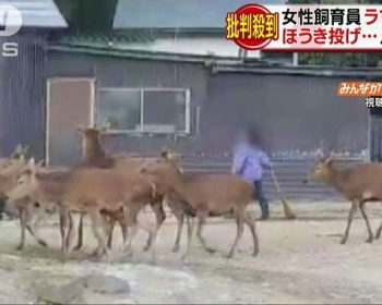 栃木・那須サファリパークで飼育員がラマにホウキを投げる、蹴る等の暴行で問題に(画像・動画あり)