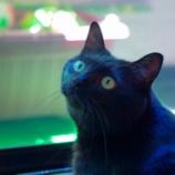 『きょうのいちまい・「ボブという名の猫」を見て』の画像