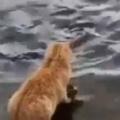 【ネコ】 魚に「パンくず」をあげていた。そこに猫がやってくる。どうしたの? → こうなった…