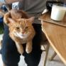 猫と暮らすと、食べづらい日々