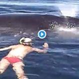 『人間に助けられたクジラの感謝のエール!』の画像