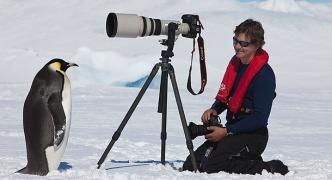 ペンギン「なんか撮影してるンゴwwwwww」