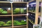 交野市初?な水草専門店『WAKABA』っていうのがオープンしてるので行ってみた!~倉治。府道736号線沿いのアクアリウムのお店~